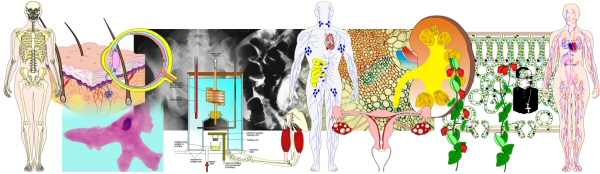 Biology Graphics 11-16 Sample Images